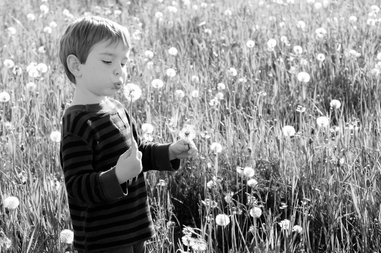 Kids Blowing Dandelion fuzz