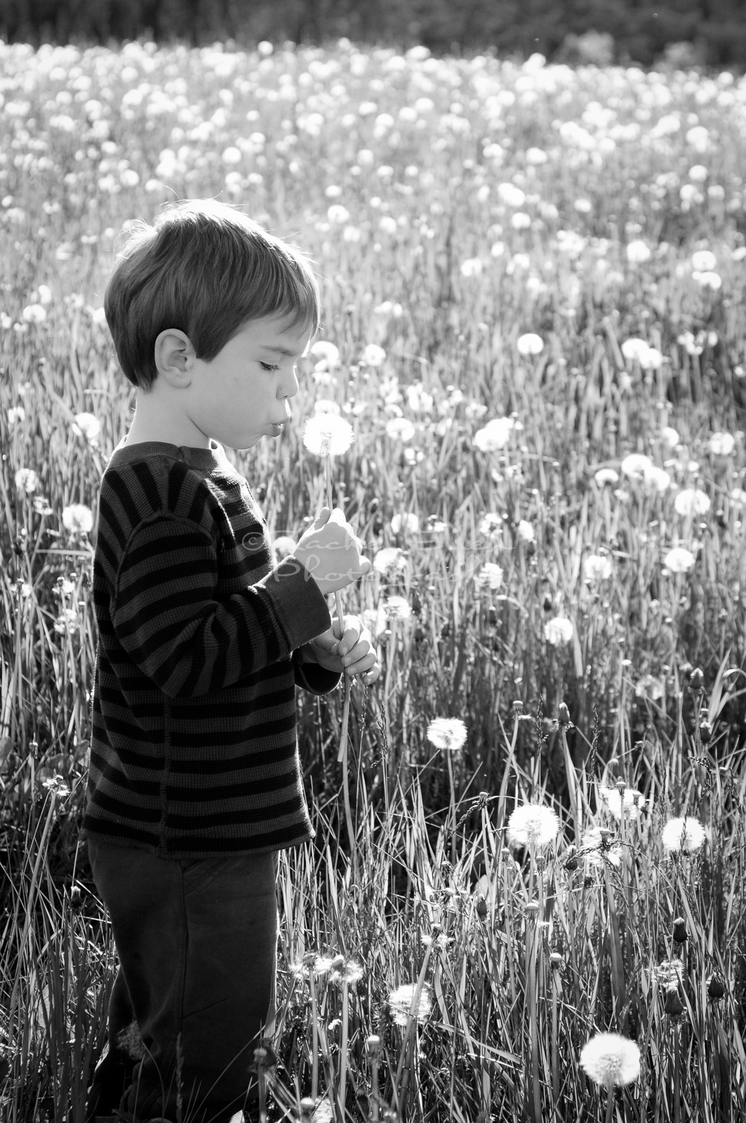 Kids Blowing Dandelion fuz