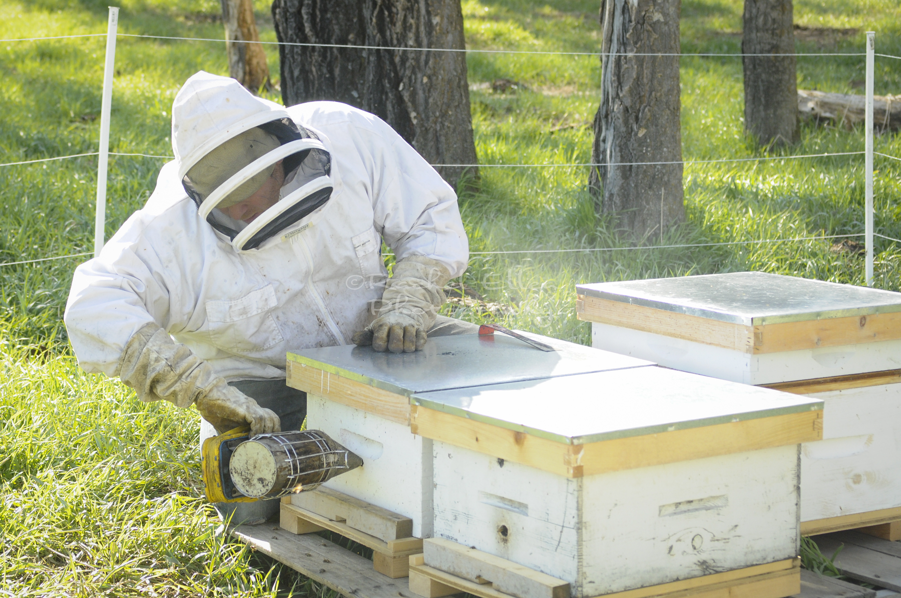 beekeeper in the MD of Foothills