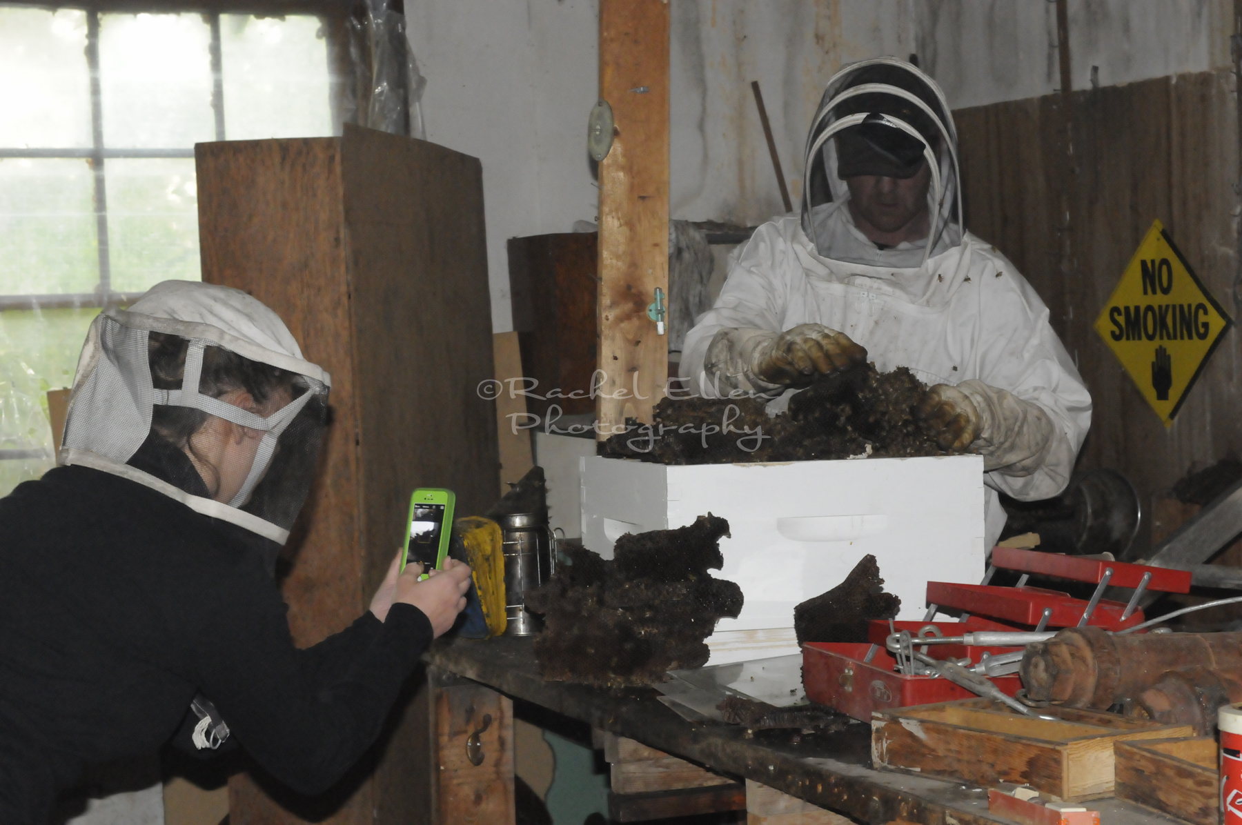 removing honeybees from an abandoned schoolhouse