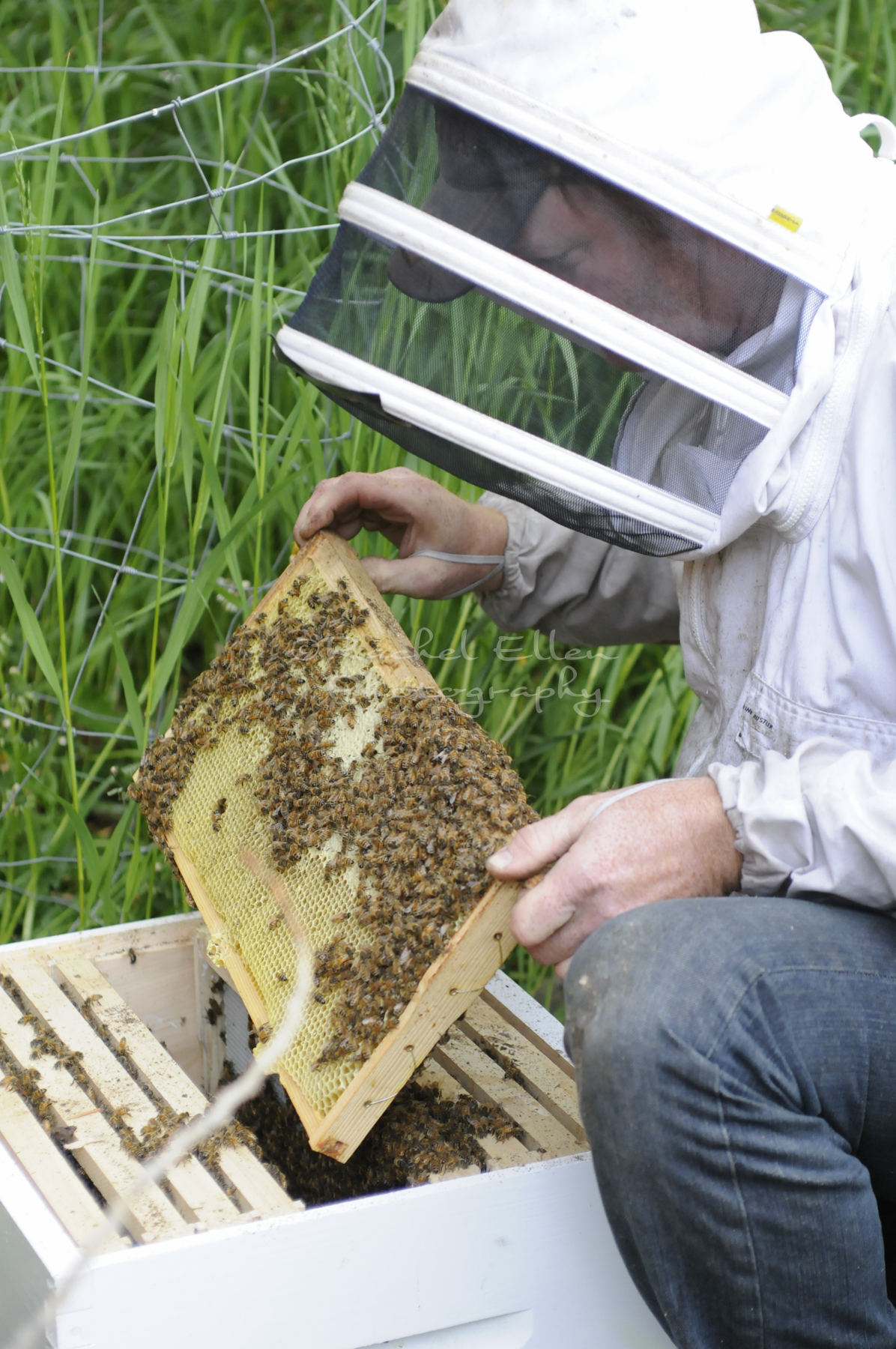 beekeeper looking for the queen