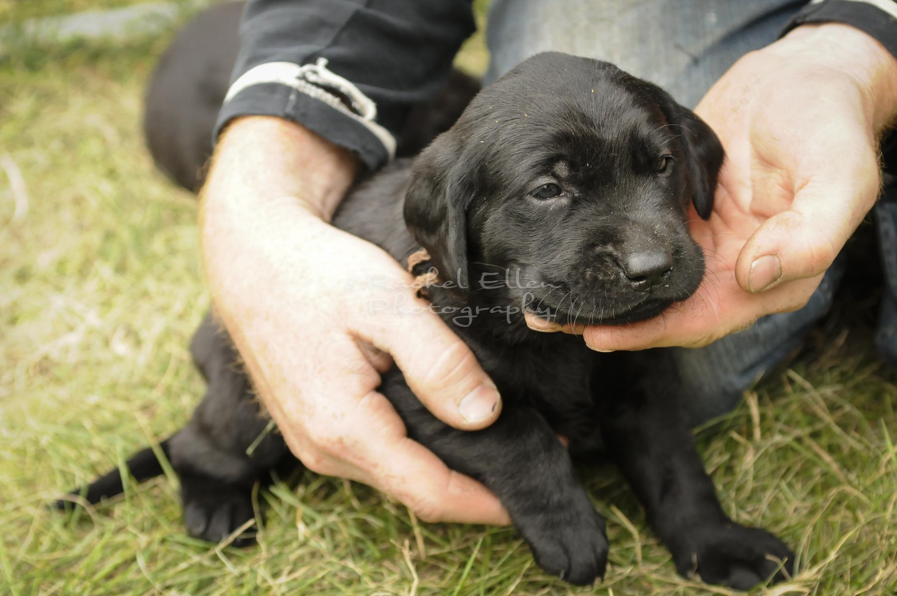 Puppies3.5wks-18