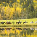 horseback riding in Alberta