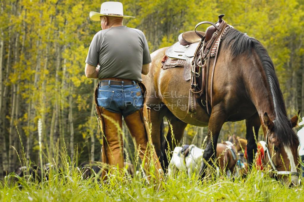 Alberta cowboy