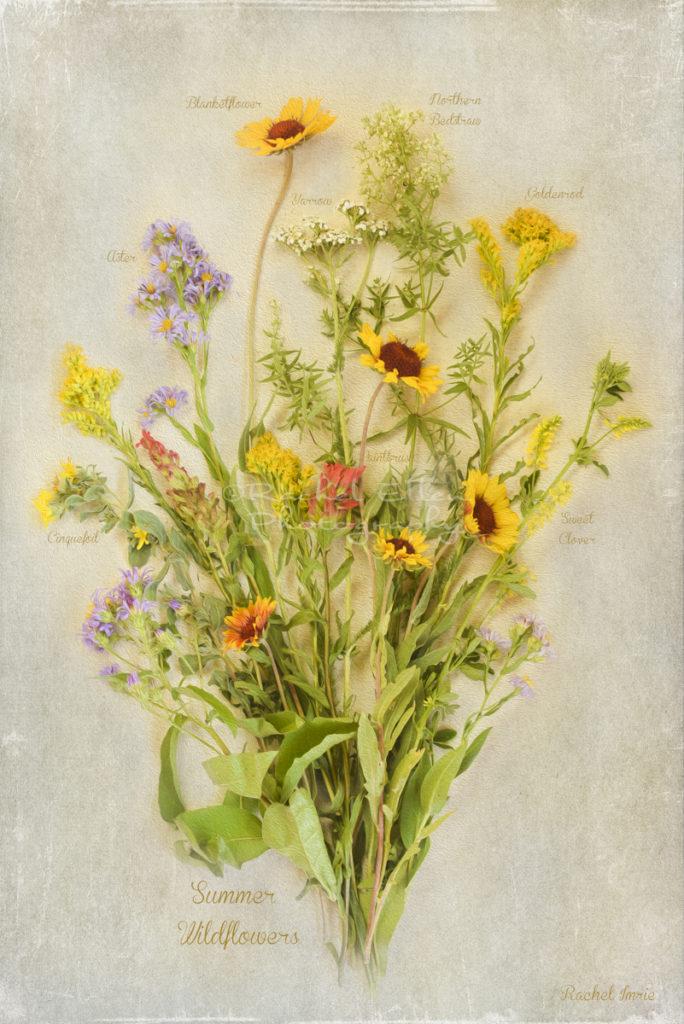 Vintage Wildflower Botanical Print